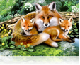 631 Foxes