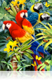 773 Majestic Macaws 3D